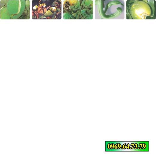 Phân bón lá Bortrac Hợp Trí giúp phòng và trị bệnh cho cây ăn trái