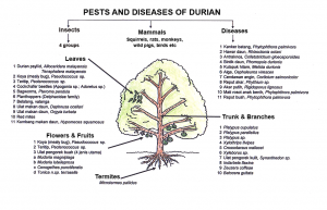 durian-pests-diseases-chart