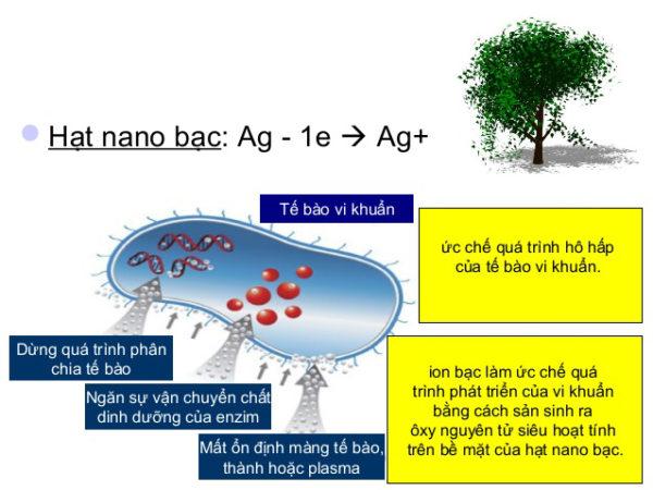 Phân bón vi lượng Nano cao cấp Nano Bạc - Nola