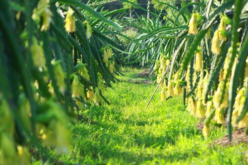 Đất vàng Du Lịch Kế bên Khu Du Lịch mới Safari Bình Thuận Chỉ từ 50 ngàn/m2