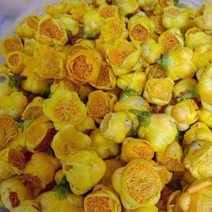 Trà hoa vàng Tam Đảo - Trung Tâm Thảo Dược Tam Đảo