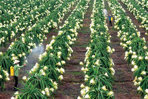 Chiêm ngưỡng khu vườn Thanh Long Bình Thuận tuyệt đẹp