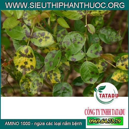 AMINO 1000 - ngừa các loại nấm bệnh