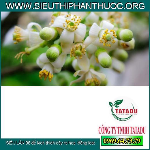 Sử dụng SIÊU LÂN 86 để kích thích cây ra hoa, ra hoa đồng loạt là một biện pháp thông minh