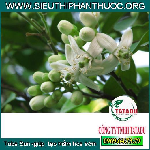 Toba Sun -giúp tạo mầm hoa sớm
