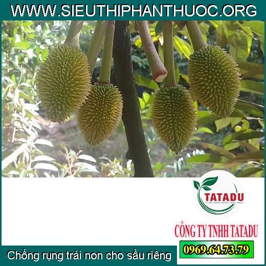 Chống rụng trái non cho sầu riêng