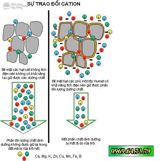 Tăng khả năng hút dinh dưỡng và nước từ đất của cây trồng, hạn chế tối đa sự rửa trôi khoáng dinh dưỡng trong đất