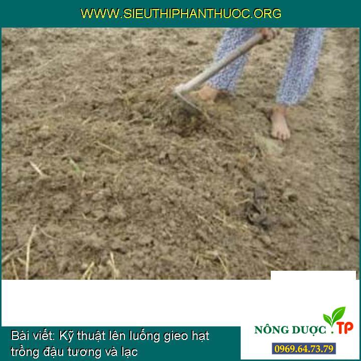 Kỹ thuật lên luống gieo hạt trồng đậu tương và lạc