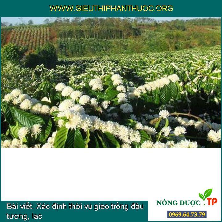 Xác định thời vụ gieo trồng đậu tương, lạc