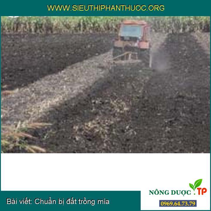 Chuẩn bị đất trồng mía