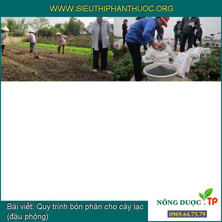 Quy trình bón phân cho cây lạc (đậu phộng)