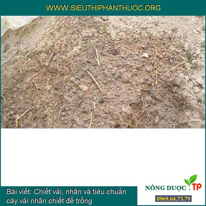 Chiết vải, nhãn và tiêu chuẩn cây vải nhãn chiết để trồng