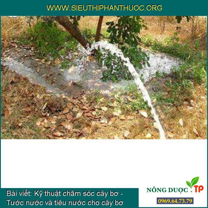 Kỹ thuật chăm sóc cây bơ - Tước nước và tiêu nước cho cây bơ