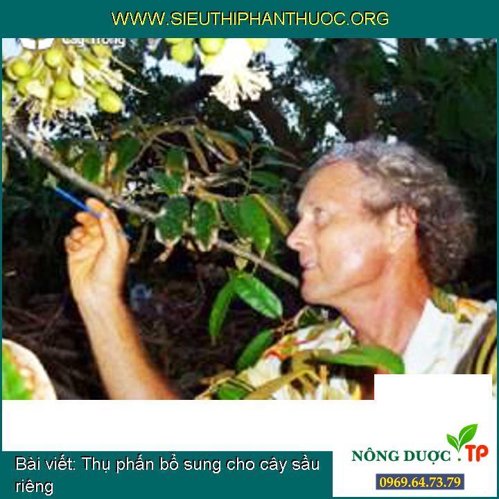 Thụ phấn bổ sung cho cây sầu riêng