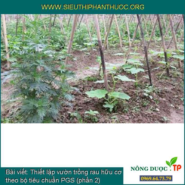 Thiết lập vườn trồng rau hữu cơ theo bộ tiêu chuẩn PGS (phần 2)