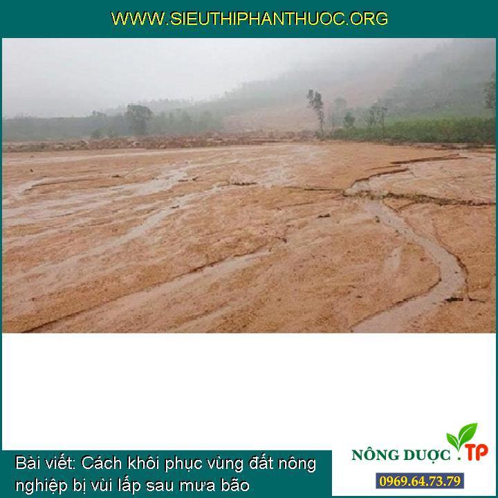 Cách khôi phục vùng đất nông nghiệp bị vùi lấp sau mưa bão