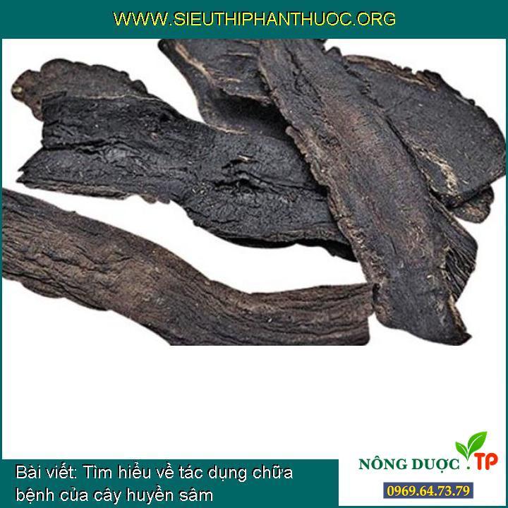 Tìm hiểu về tác dụng chữa bệnh của cây huyền sâm