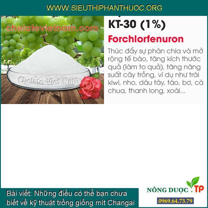 Những điều có thể bạn chưa biết về kỹ thuật trồng giống mít Changai (P2)