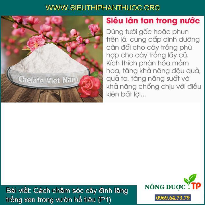 Cách chăm sóc cây đinh lăng trồng xen trong vườn hồ tiêu (P1)