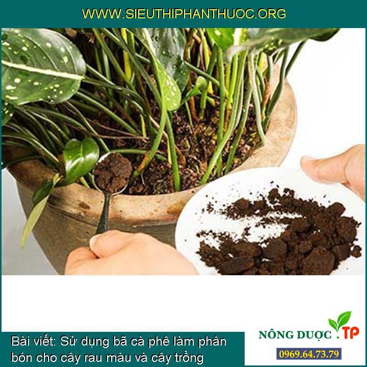 Sử dụng bã cà phê làm phân bón cho cây rau màu và cây trồng quanh nhà