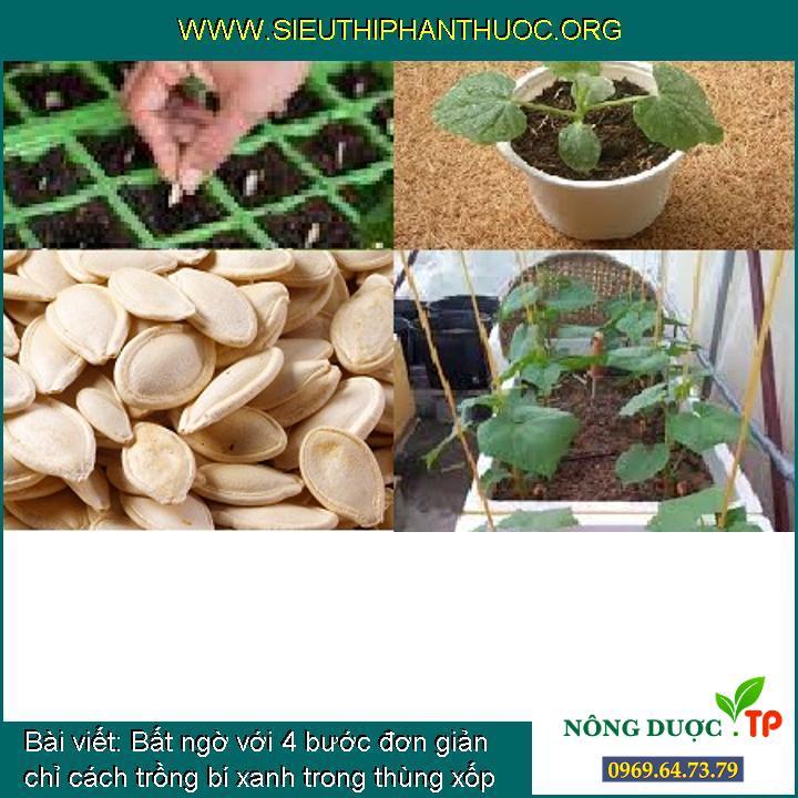 Bất ngờ với 4 bước đơn giản chỉ cách trồng bí xanh trong thùng xốp