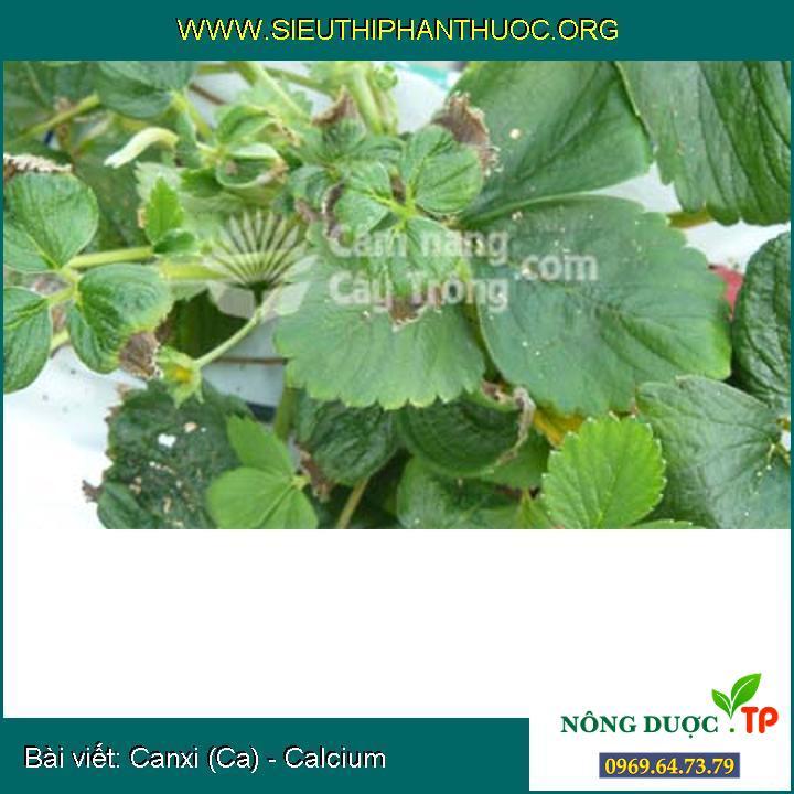 Canxi (Ca) - Calcium