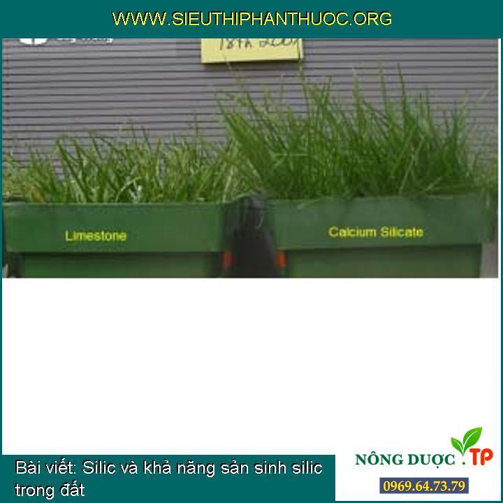 Silic và khả năng sản sinh silic trong đất