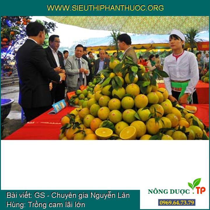 GS - Chuyên gia Nguyễn Lân Hùng: Trồng cam lãi lớn