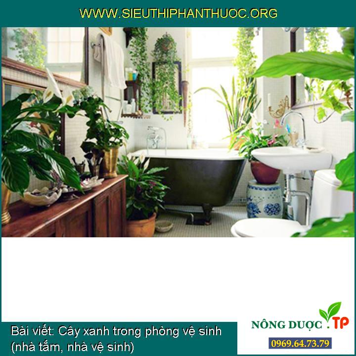 Cây xanh trong phòng vệ sinh (nhà tắm, nhà vệ sinh)