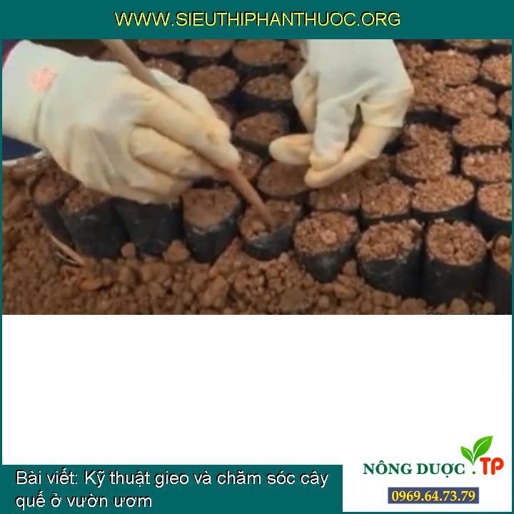 Kỹ thuật gieo và chăm sóc cây quế ở vườn ươm