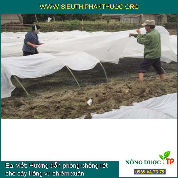 Hướng dẫn phòng chống rét cho cây trồng vụ chiêm xuân