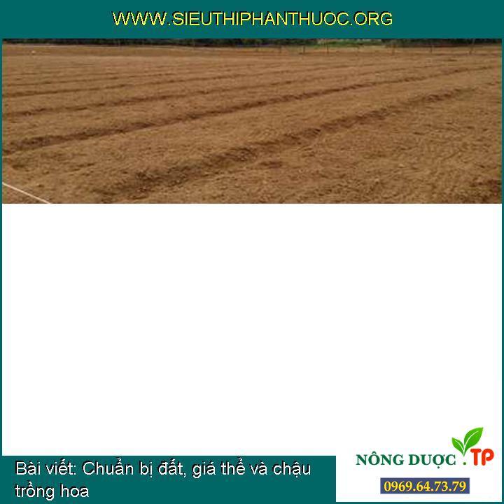 Chuẩn bị đất, giá thể và chậu trồng hoa