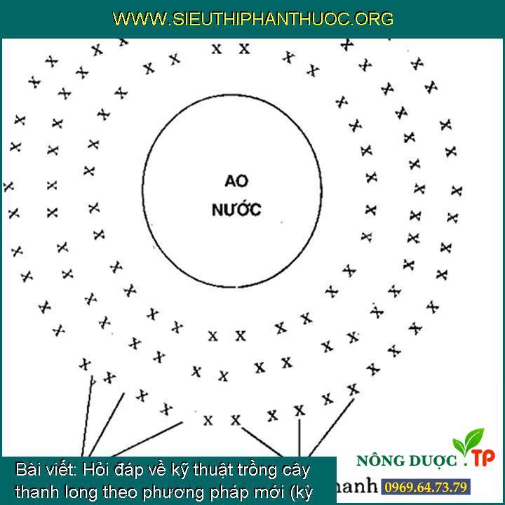 Hỏi đáp về kỹ thuật trồng cây thanh long theo phương pháp mới (kỳ 5)