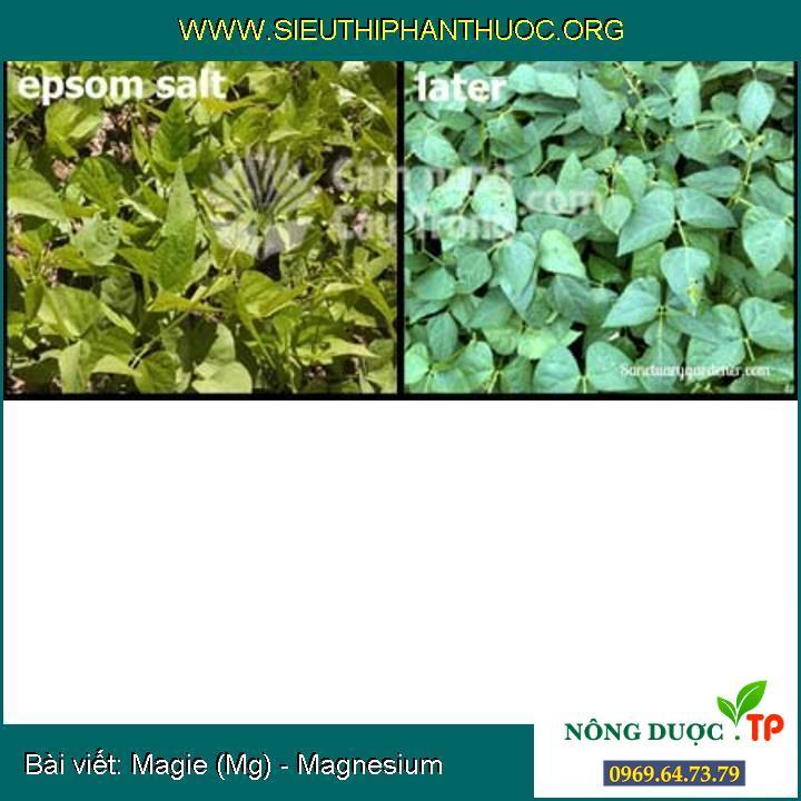 Magie (Mg) - Magnesium