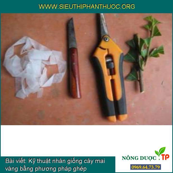 Kỹ thuật nhân giống cây mai vàng bằng phương pháp ghép