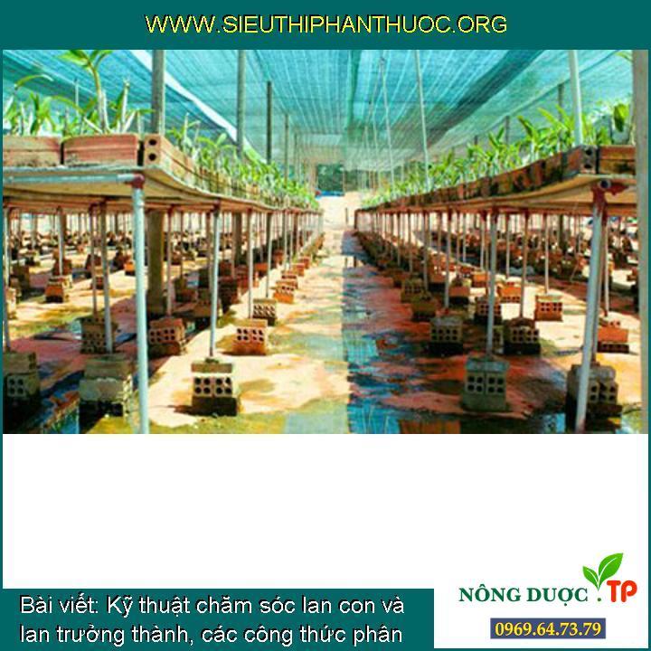 Kỹ thuật chăm sóc lan con và lan trưởng thành, các công thức phân bón cho cây lan