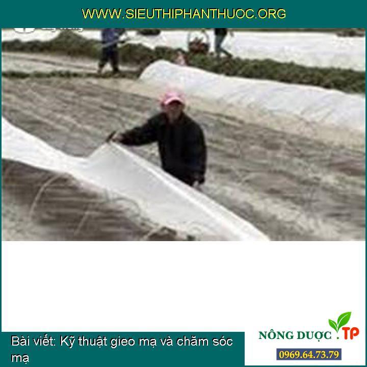 Kỹ thuật gieo mạ và chăm sóc mạ