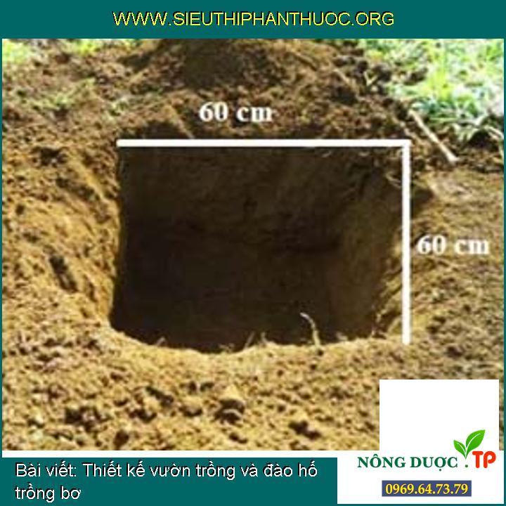 Thiết kế vườn trồng và đào hố trồng bơ