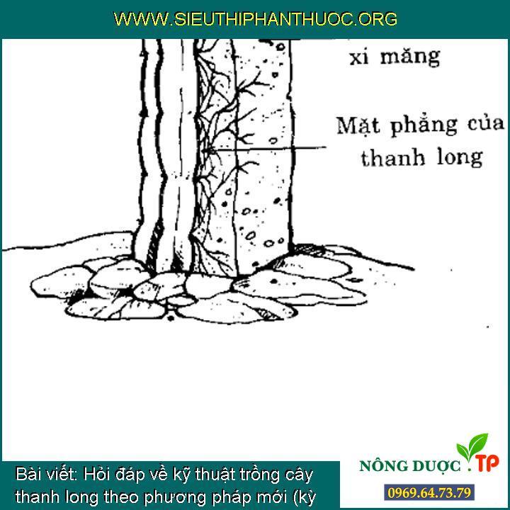 Hỏi đáp về kỹ thuật trồng cây thanh long theo phương pháp mới (kỳ 8)