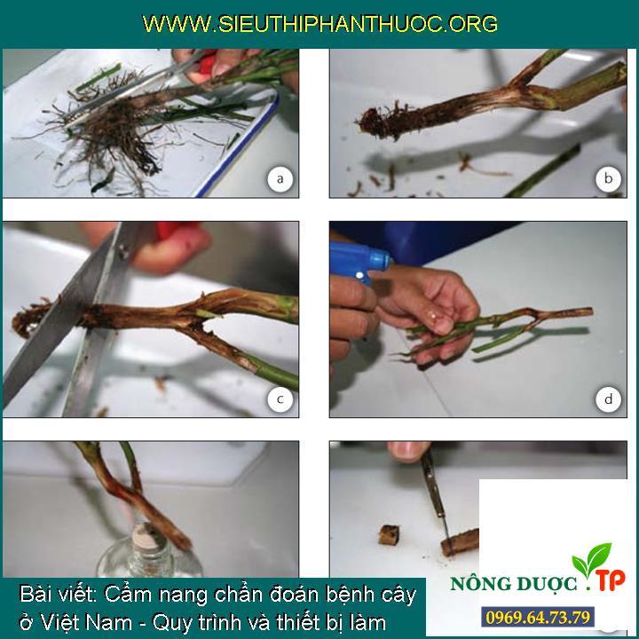 Cẩm nang chẩn đoán bệnh cây ở Việt Nam - Quy trình và thiết bị làm việc trong phòng thí nghiệm