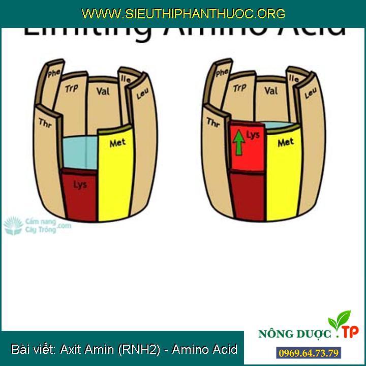 Axit Amin (RNH2) - Amino Acid