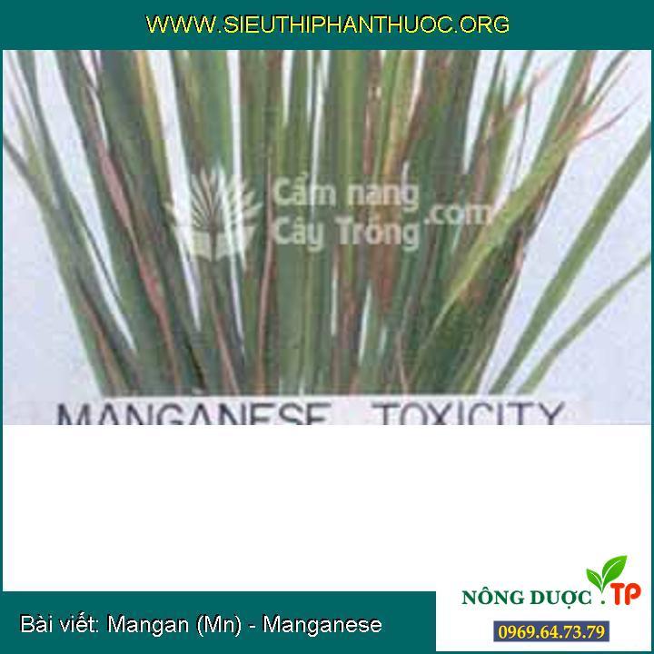 Mangan (Mn) - Manganese