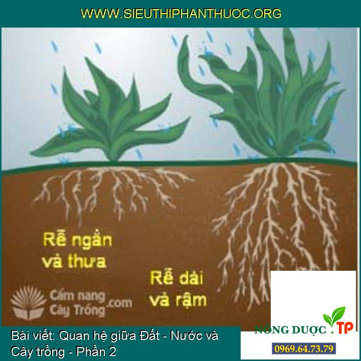 Quan hệ giữa Đất - Nước và Cây trồng - Phần 2