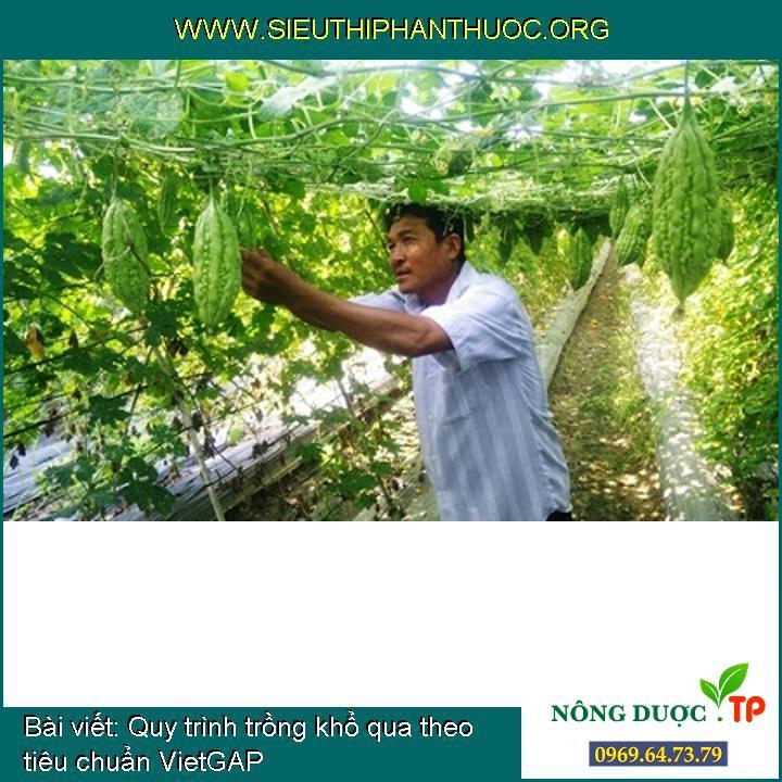 Quy trình trồng khổ qua theo tiêu chuẩn VietGAP