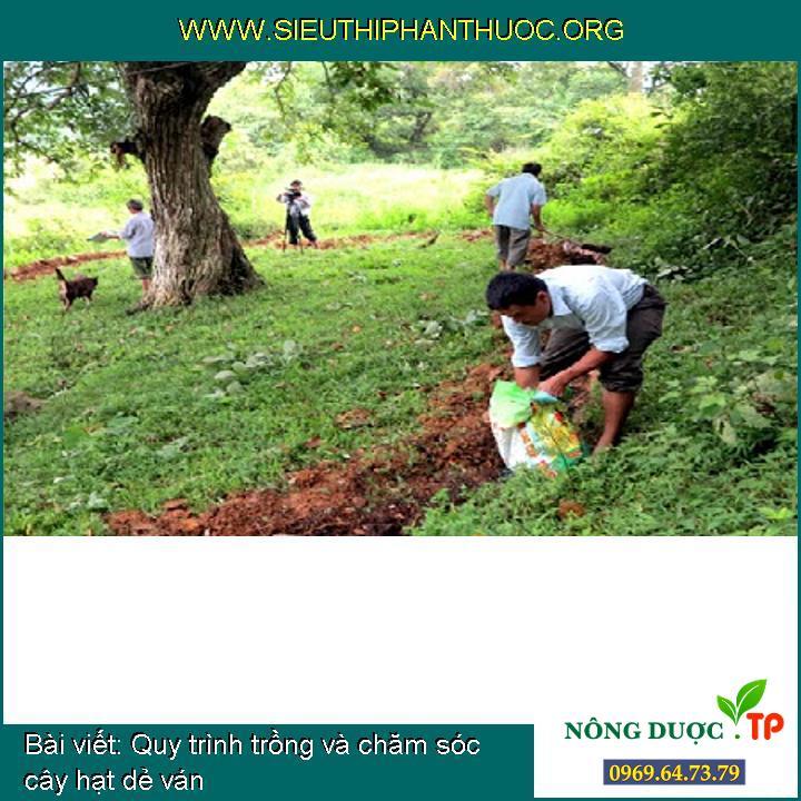 Quy trình trồng và chăm sóc cây hạt dẻ ván