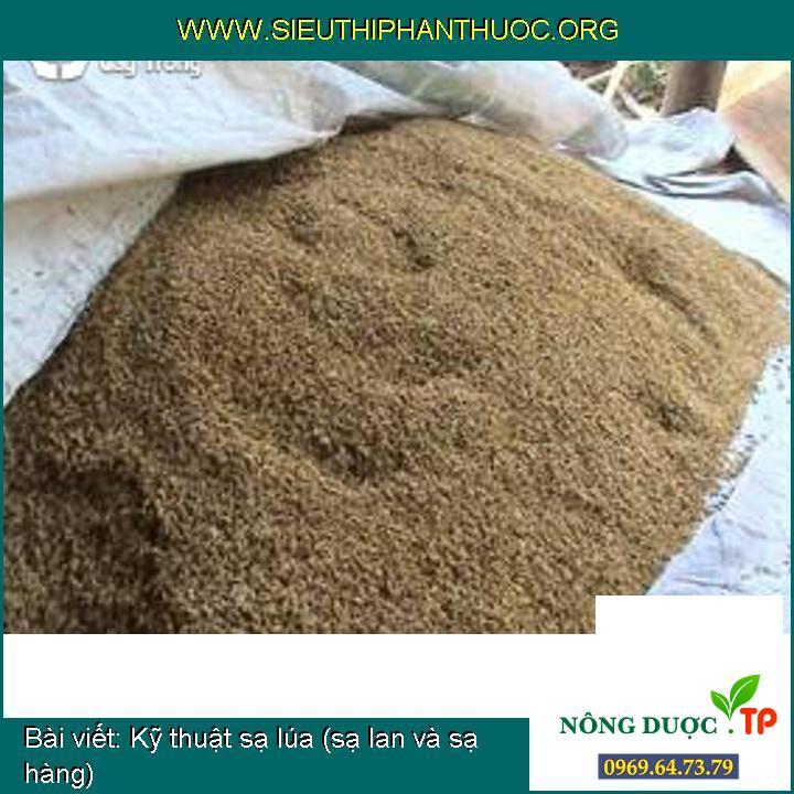 Kỹ thuật sạ lúa (sạ lan và sạ hàng)