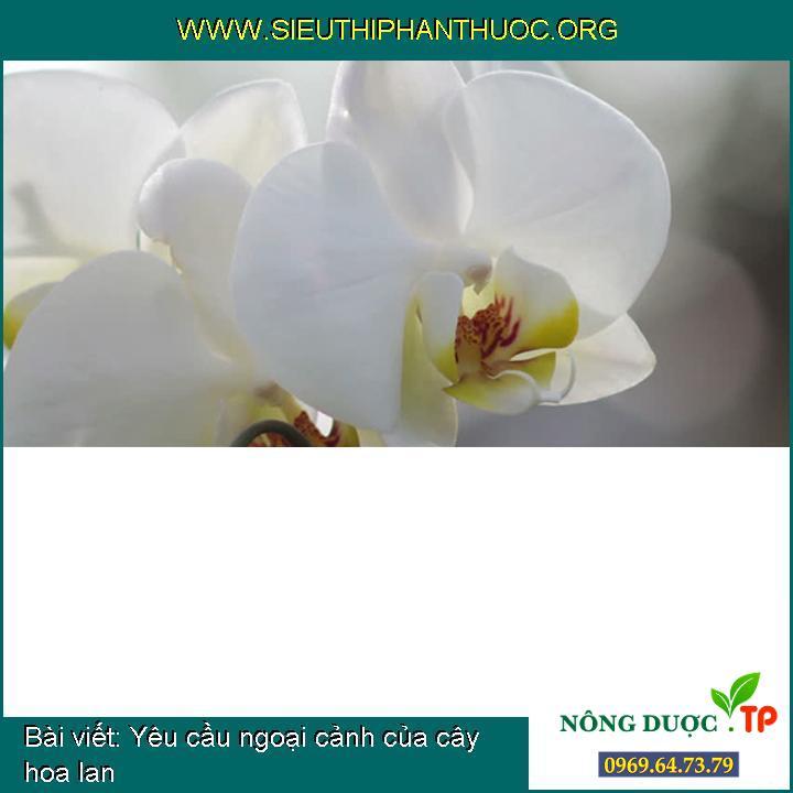 Yêu cầu ngoại cảnh của cây hoa lan