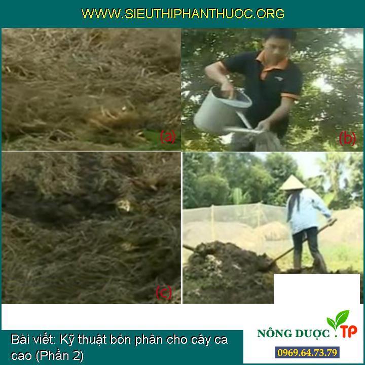 Kỹ thuật bón phân cho cây ca cao (Phần 2)