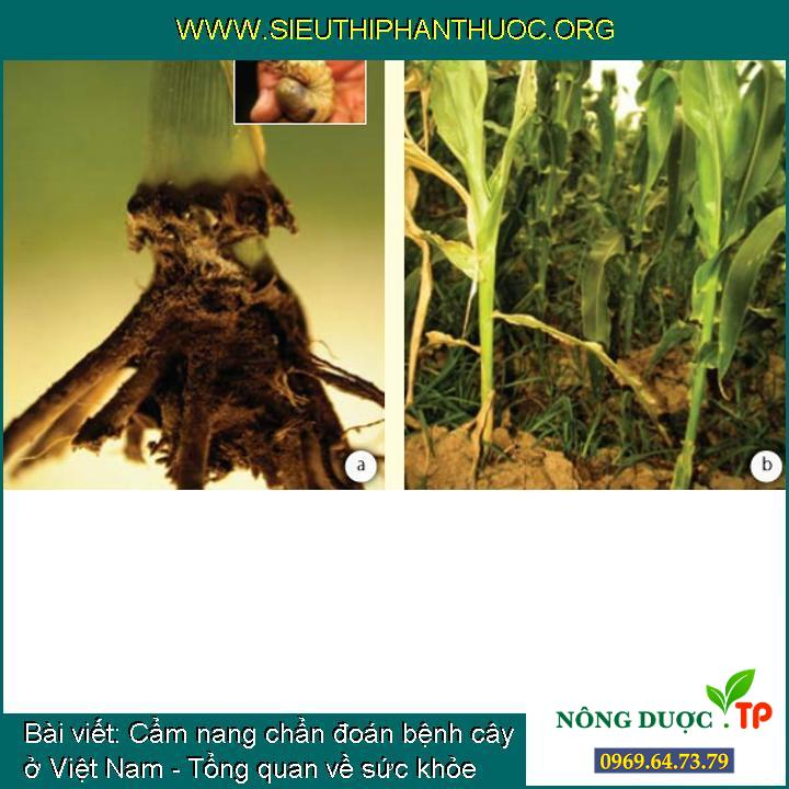 Cẩm nang chẩn đoán bệnh cây ở Việt Nam - Tổng quan về sức khỏe thực vật