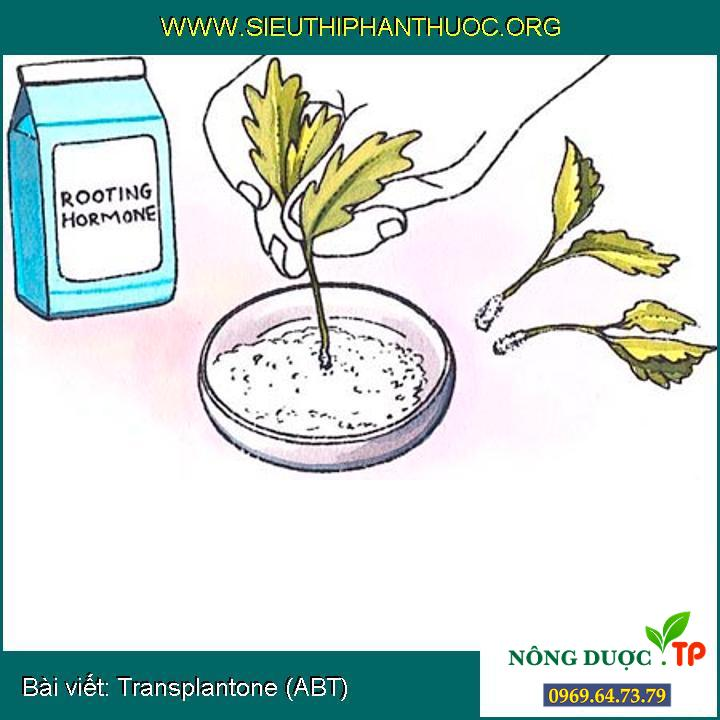 Transplantone (ABT)